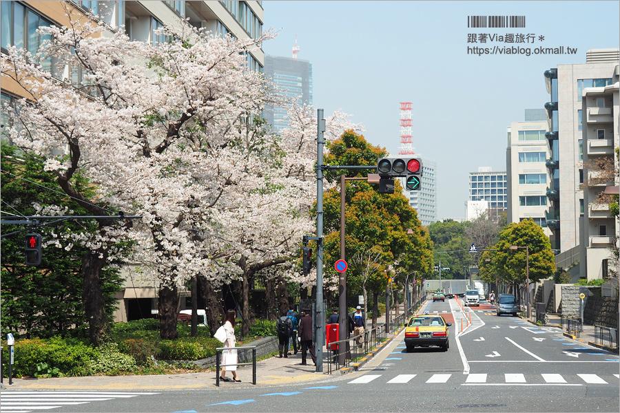【東京櫻花季】六本木櫻花景點推薦~必去!東京中城TOKYO MIDTOWN超美櫻花天橋,巧遇櫻吹雪美炸了!