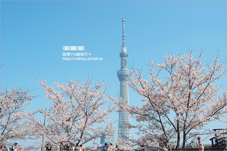 【東京櫻花行程】淺草隅田公園~櫻花+晴空塔+隅田川~一次滿足!拍晴空塔的超美角度看這篇!