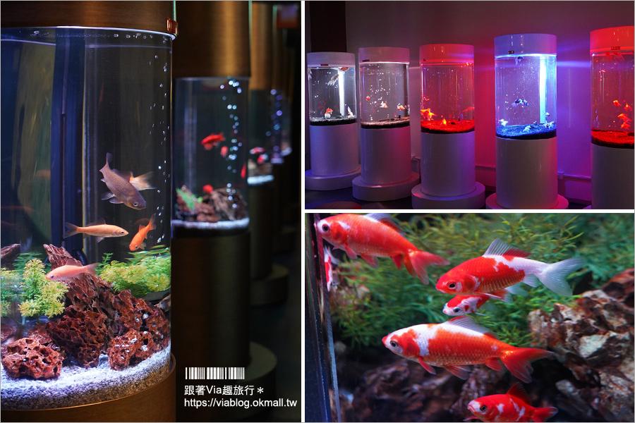 【奈良自由行】M!NARA玩不完!忍者體驗館、金魚博物館、和服體驗好遊趣+入住Nara Royal Hotel泡溫泉好放鬆!