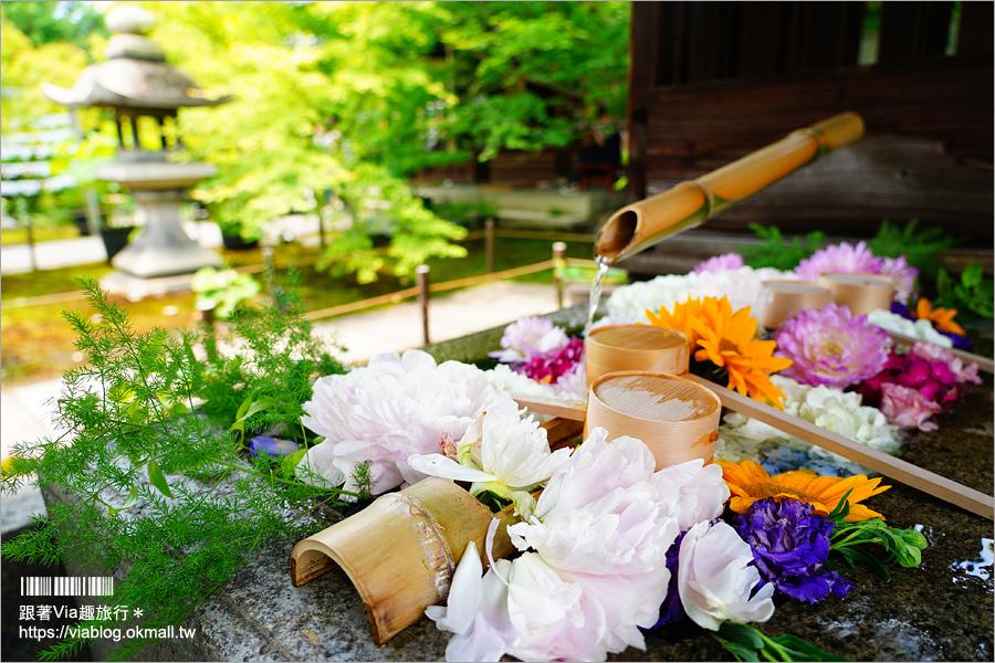 【京都】京都勝林寺~朝聖日本最夯的花幻花手水!秋季來還有「吉祥紅葉」美景的紅葉名勝!