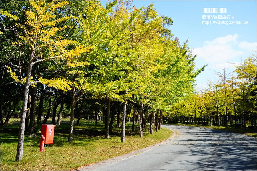【福岡景點】海之中道海濱公園~秋季夢幻波波草來囉!九州掃帚草景點推薦!※親子旅遊推薦景點※
