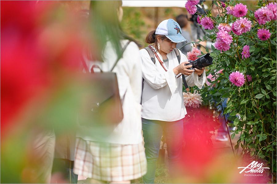 【廣島旅行】微風輕旅行X空氣感寫真,沉醉在「世羅高原」迷幻的空氣氛圍~透明小清新,療癒好舒心!