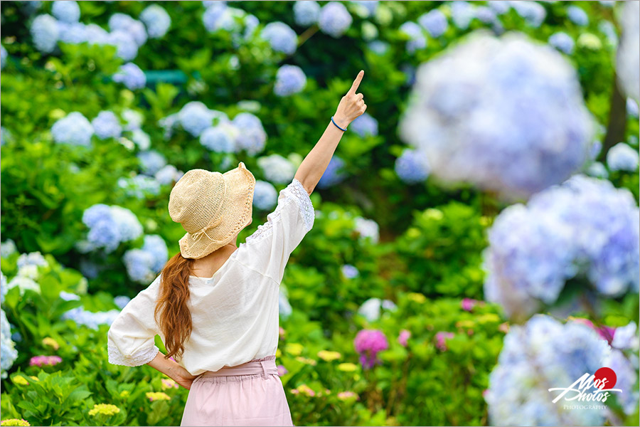 新北繡球花景點》高家繡球花田~新北萬里賞花新亮點!夏季專屬限定花卉大盛開,絢麗浪漫繡球花美炸了!