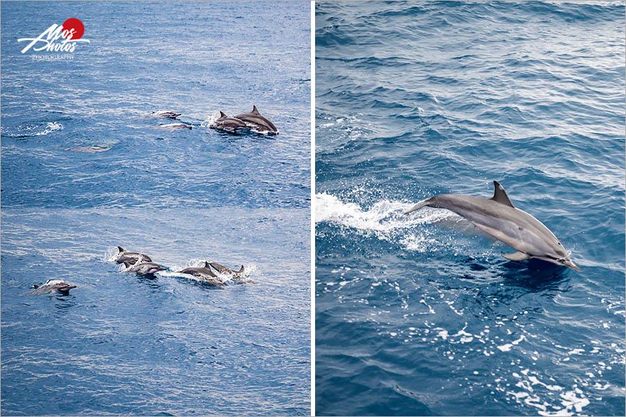 【宜蘭龜山島】頭城龜山島半日遊~登島、繞島、追鯨豚,體驗自然生態與歷史巡禮,新鮮有趣又好玩~~
