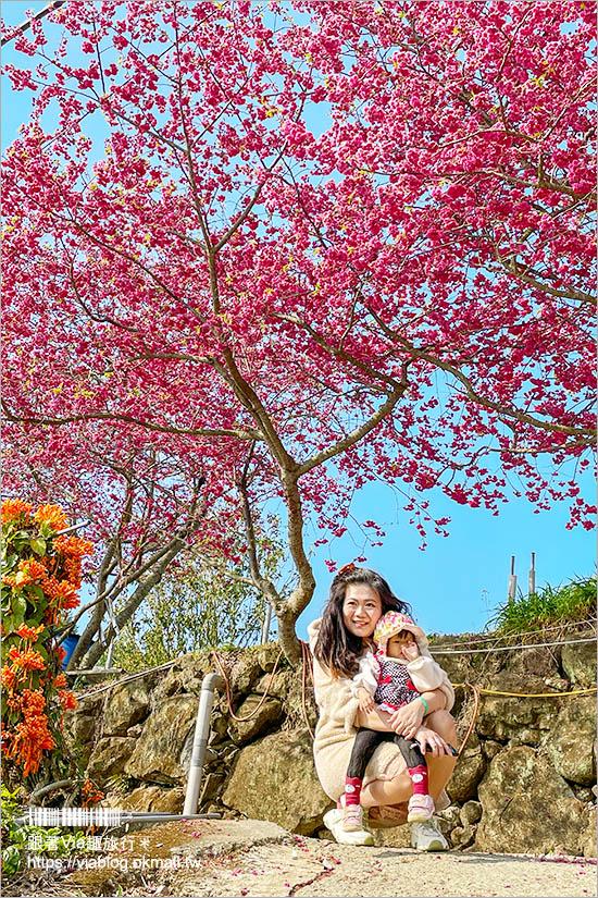 苗栗大湖採草莓》馬那邦山·秀麗農莊~採草莓賞櫻花,私房秘境景點,春季嬉遊趣!