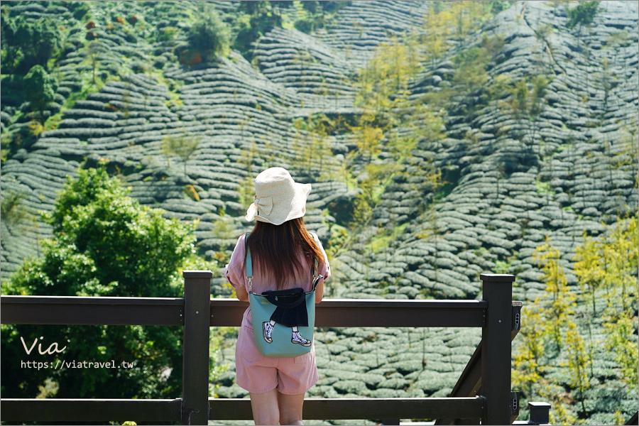 南投景點推薦》松安景觀廣場~山林中的私房小秘境!夢幻茶園步道及賞景平台一次收集!