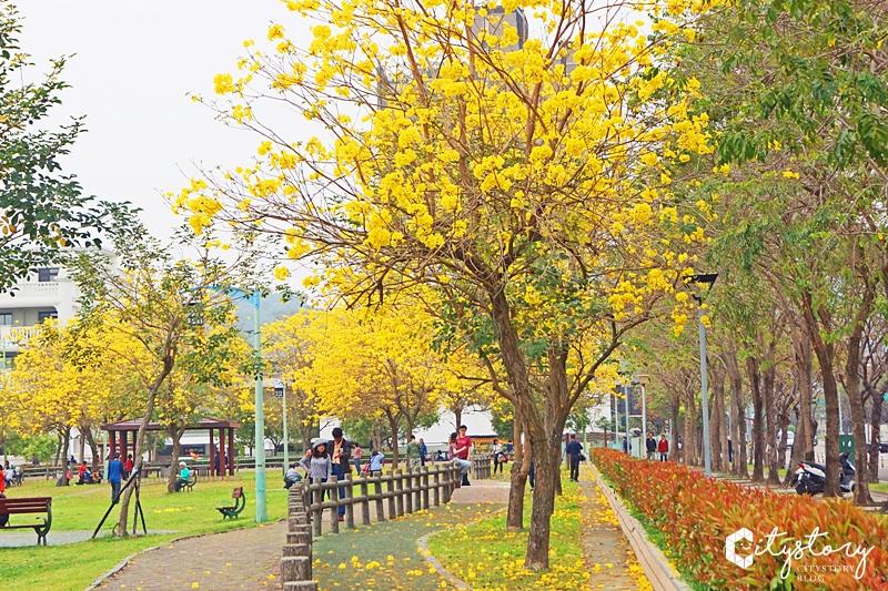 【台中風鈴木】廍子公園~台中最美黃金公園怎能錯過賞花點!