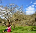 【柳家梅園】大人氣的賞梅景點!牛稠坑「柳家梅園」新私房賞梅步道