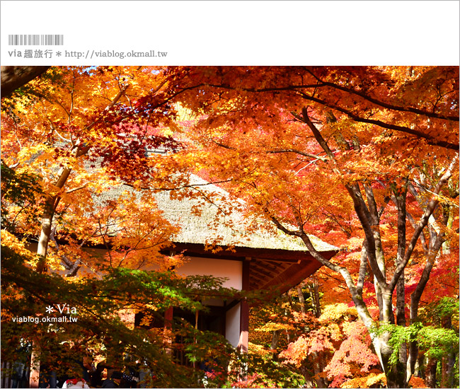 【京都賞楓推薦】京都常寂光寺~一生必去一次的賞楓景點!